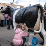 Корова пластиковая, доярка неопытная, но молоко настоящее