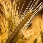 grains_02