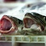 рыба-02