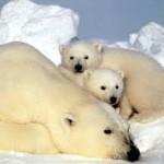 экосистемы Арктики
