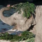 елки для слонов