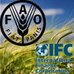 FAO_IFC_1