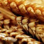 wheat_14