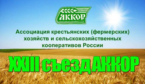 AKKOR_1