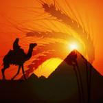 Egipet_wheat_1