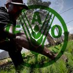 FAO_agrolesa