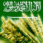 Saud_Aravia_1