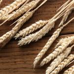 wheat_22