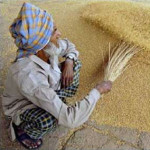 wheat_Bangladesh