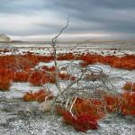 Aralskoe_more_1