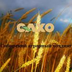 CAXO_1