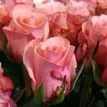 cveti_rosa_1