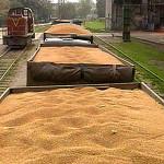 wheat_02
