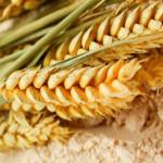 wheat_05