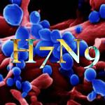 ptichi_gripp_H7N9