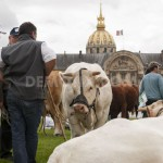 farmers-and-breeders-protest-with-farm-animals-in-paris_2186766