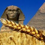 Egipet_wheat_2