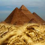 Egipet_wheat_3