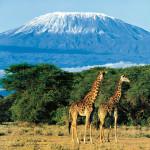 Kilimandzharo_gora