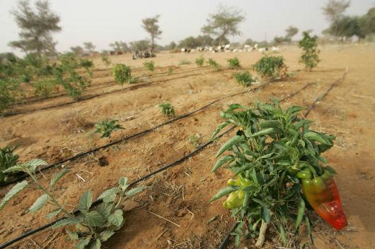 капельное орошение в Нигере