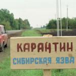 sibirskaya_yazva_2
