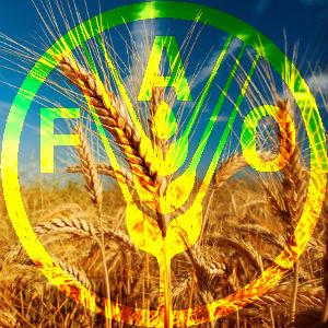 FAO_5