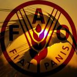 FAO_6