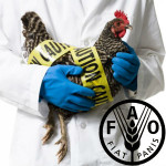 FAO_7