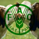 FAO_8