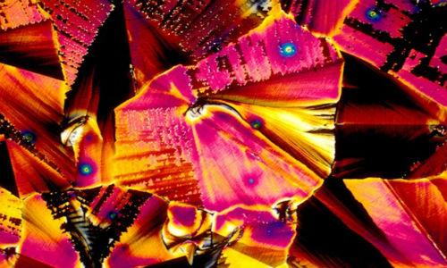 vino_pod_mikroskopom_1