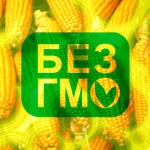 GMO_4