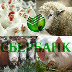 Sberbank_1