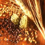 wheat_solod_2