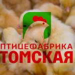 Tomskaya_pticefabrika