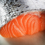 riba_semga_1
