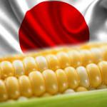Yaponia_kukuruza