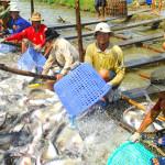 riba_Vietnam