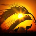 wheat_Avstralia
