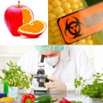 GMO_7