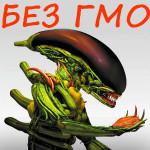 GMO_8