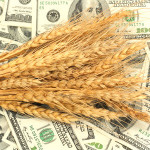 wheat_53