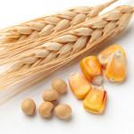 wheat_54