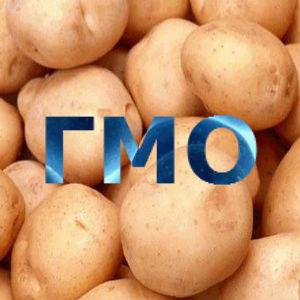 GMO_11