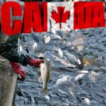 Kanada_riba