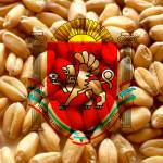 Krim_wheat