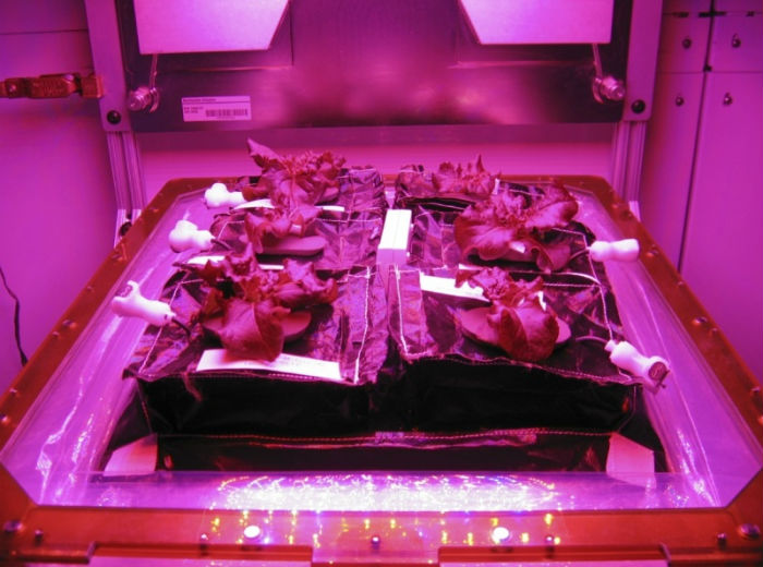 NASA_veggie_project_3