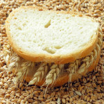 wheat_42