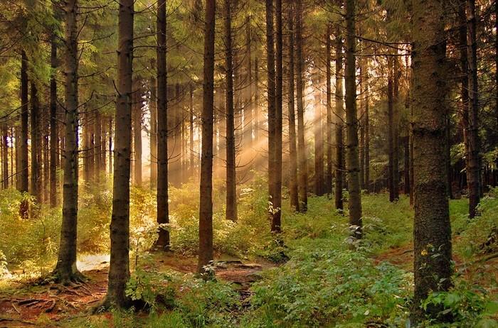 картинки о лесах россии