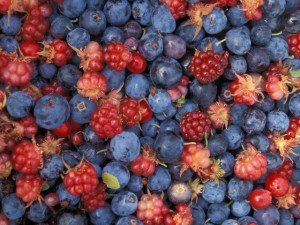 Food_Berries_and_fruits_and_nuts_Wood_allsorts_022800_29[1]
