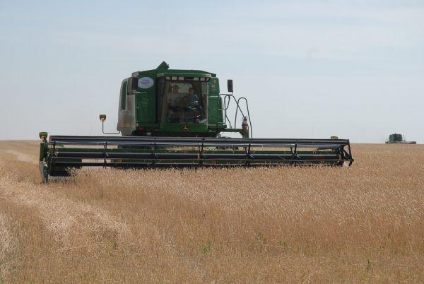В Российской Федерации собрано на26% больше зерна, чем в 2015-ом